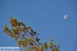 Pine trees Angistri (Agkistri) | Greece | Greece  Photo 3 - Photo JustGreece.com
