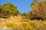 Pine trees Angistri (Agkistri) | Greece | Greece  Photo 7 - Photo JustGreece.com