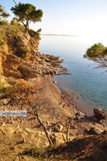 Klein Sandy beach between the dennebomen near Skala | Angistri (Agkistri) - Saronic Gulf Islands - Greece | Photo 4 - Photo JustGreece.com