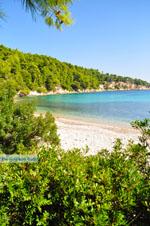 Milia Alonissos | Sporades | Greece  Photo 15 - Photo JustGreece.com