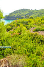 JustGreece.com Chrisi Milia | Alonissos Sporades | Greece  Photo 24 - Foto van JustGreece.com