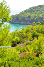 JustGreece.com Chrisi Milia | Alonissos Sporades | Greece  Photo 25 - Foto van JustGreece.com