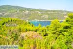 Tzortzi | Alonissos Sporades | Greece  Photo 1 - Photo JustGreece.com