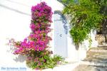 Alonissos town (Chora) | Sporades | Greece  Photo 91 - Photo JustGreece.com