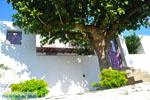 Alonissos town (Chora) | Sporades | Greece  Photo 115 - Photo JustGreece.com