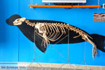 MOM, Monachus-Monachus seals Alonissos | Sporades Photo 7 - Photo JustGreece.com
