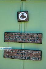 MOM, Monachus-Monachus seals Alonissos | Sporades Photo 9 - Photo JustGreece.com