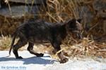 Hozoviotissa Amorgos - Island of Amorgos - Cyclades Photo 104 - Photo JustGreece.com