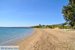 Nea Makri near Athens | Attica - Central Greece | Greece  Photo 1 - Photo JustGreece.com