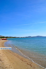 Nea Makri near Athens | Attica - Central Greece | Greece  Photo 3 - Photo JustGreece.com