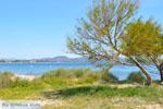 Nea Makri near Athens | Attica - Central Greece | Greece  Photo 41 - Foto van JustGreece.com