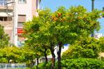 Nea Makri near Athens | Attica - Central Greece | Greece  Photo 51 - Photo JustGreece.com