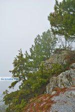 Dennenbossen near Olympus | Pieria Macedonia | Greece - Photo JustGreece.com