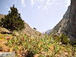 JustGreece.com From Agia Roumeli to the Samaria gorge | Chania Crete | Greece - Foto van JustGreece.com