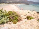 Sandy beach Elafonisi (Elafonissi) | Chania Crete | Chania Prefecture 50 - Photo JustGreece.com