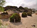Sandy beach Elafonisi (Elafonissi) | Chania Crete | Chania Prefecture 61 - Photo JustGreece.com