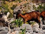 Samaria gorge | Crete | Greece Photo 3 - Photo JustGreece.com