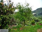 JustGreece.com Traditional Village Topolia | Chania Crete | Chania Prefecture 14 - Foto van JustGreece.com