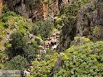 Traditional Village Topolia | Chania Crete | Chania Prefecture 25 - Photo JustGreece.com