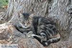 Lendas (Lentas) | South Crete | Greece  Photo 40 - Photo JustGreece.com