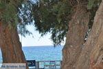 JustGreece.com Lendas (Lentas) | South Crete | Greece  Photo 41 - Foto van JustGreece.com