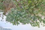 Lendas (Lentas) | South Crete | Greece  Photo 44 - Photo JustGreece.com
