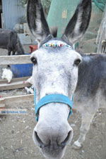 JustGreece.com Donkey sanctuary Aghia Marina near Petrokefali | South Crete | Greece  Photo 21 - Foto van JustGreece.com