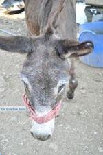 Donkey sanctuary Aghia Marina near Petrokefali | South Crete | Greece  Photo 25 - Photo JustGreece.com