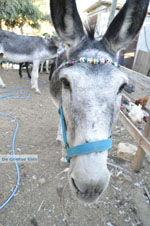 Donkey sanctuary Aghia Marina near Petrokefali | South Crete | Greece  Photo 31 - Photo JustGreece.com