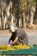 JustGreece.com Panagia Kaliviani near Mires| South Crete | Greece  Photo 11 - Foto van JustGreece.com