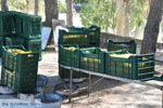 JustGreece.com Panagia Kaliviani near Mires| South Crete | Greece  Photo 20 - Foto van JustGreece.com