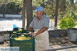JustGreece.com Panagia Kaliviani near Mires| South Crete | Greece  Photo 23 - Foto van JustGreece.com
