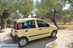 Gele Fiat Panda between the olijfbomen | South Crete | Greece  - Photo JustGreece.com