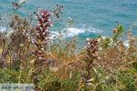 Aghia Pelagia Kythira | beach Lagada Photo 2 - Photo JustGreece.com
