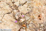 Aghia Pelagia Kythira | beach Lagada Photo 23 - Photo JustGreece.com