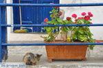 Mylopotamos Kythira | Ionian Islands | Greece | Greece  Photo 5 - Photo JustGreece.com