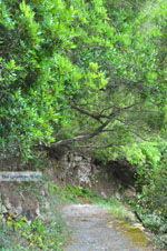 JustGreece.com Mylopotamos Kythira   Ionian Islands   Greece   Greece  Photo 29 - Foto van JustGreece.com