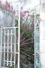 JustGreece.com Stenies   Island of Andros   Greece  Photo 5 - Foto van JustGreece.com