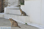 Stenies | Island of Andros | Greece  Photo 12 - Photo JustGreece.com