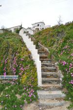 JustGreece.com Batsi | Island of Andros | Greece  | Photo 7 - Foto van JustGreece.com