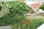 Batsi | Island of Andros | Greece  | Photo 15 - Photo JustGreece.com
