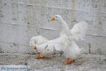Batsi | Island of Andros | Greece  | Photo 22 - Photo JustGreece.com