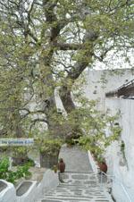 JustGreece.com Panachrantou monastery | Island of Andros | Greece  | Photo 9 - Foto van JustGreece.com