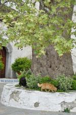 JustGreece.com Panachrantou monastery | Island of Andros | Greece  | Photo 15 - Foto van JustGreece.com