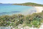 JustGreece.com beach Kypri (Golden Beach) near Batsi | Island of Andros | Greece  Photo 004 - Foto van JustGreece.com