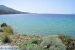 JustGreece.com beach Kypri (Golden Beach) near Batsi | Island of Andros | Greece  Photo 007 - Foto van JustGreece.com