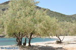 JustGreece.com beach Fellos near Gavrio | Island of Andros | Greece  | Photo 11 - Foto van JustGreece.com