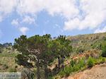 JustGreece.com nature near Volissos Photo 2 - Island of Chios - Foto van JustGreece.com