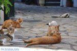 JustGreece.com Benitses | Corfu | Ionian Islands | Greece  - Photo 16 - Foto van JustGreece.com