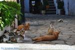 JustGreece.com Benitses | Corfu | Ionian Islands | Greece  - Photo 17 - Foto van JustGreece.com